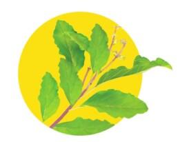 almond-branding-top-branding-agency-india-best-packaging-design-agency-mumbai-dabur-real-golden-milk-turmeric-haldi-doodh-ingredients-tulsi